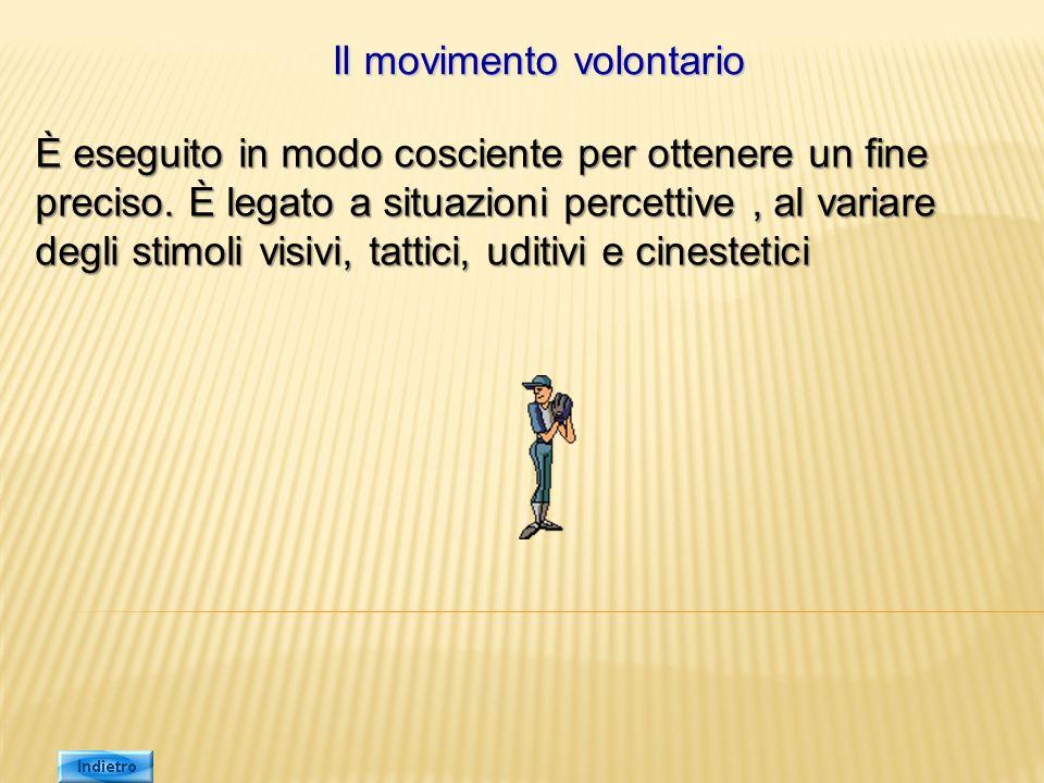 Il movimento volontario È eseguito in modo cosciente per ottenere un fine preciso. È legato a situazioni percettive, al variare degli stimoli visivi,