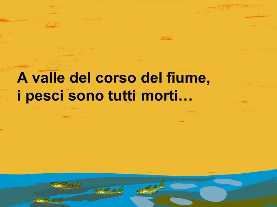 A valle del corso del fiume, i pesci sono tutti morti…