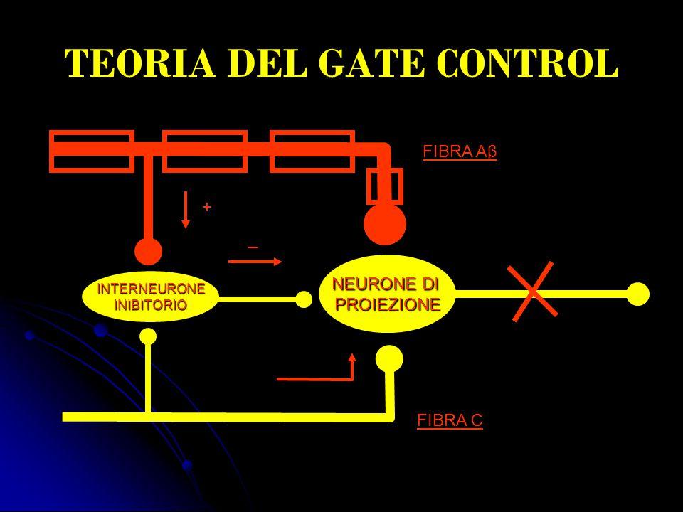 TEORIA DEL GATE CONTROL NEURONE DI PROIEZIONE INTERNEURONEINIBITORIO FIBRA Aβ FIBRA C + _