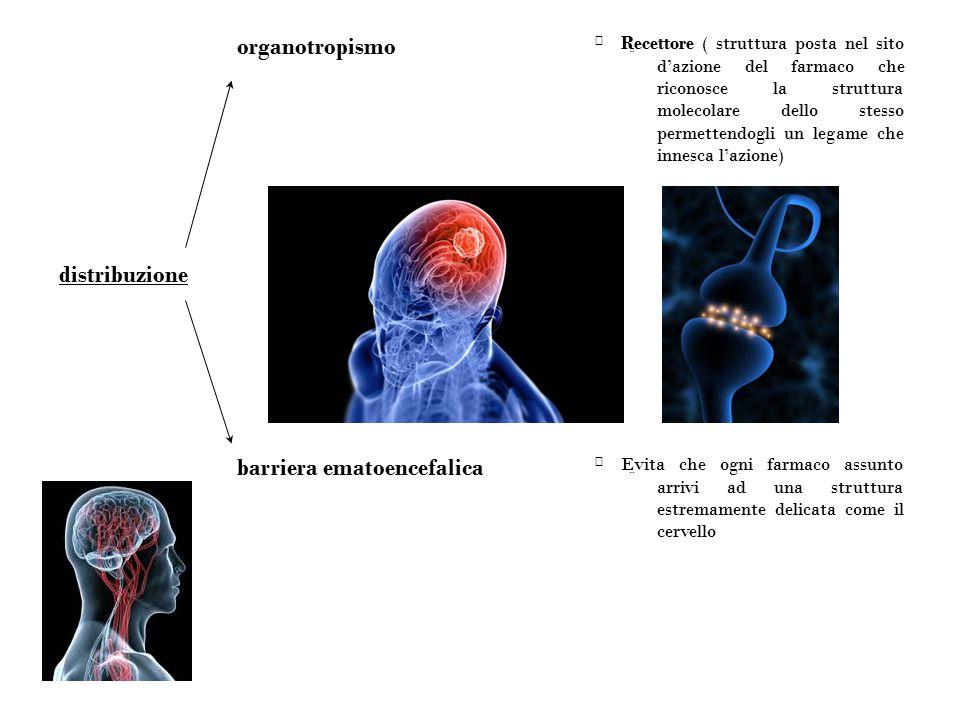 Evita che ogni farmaco assunto arrivi ad una struttura estremamente delicata come il cervello ¨¨ barriera ematoencefalica distribuzione Recettore (