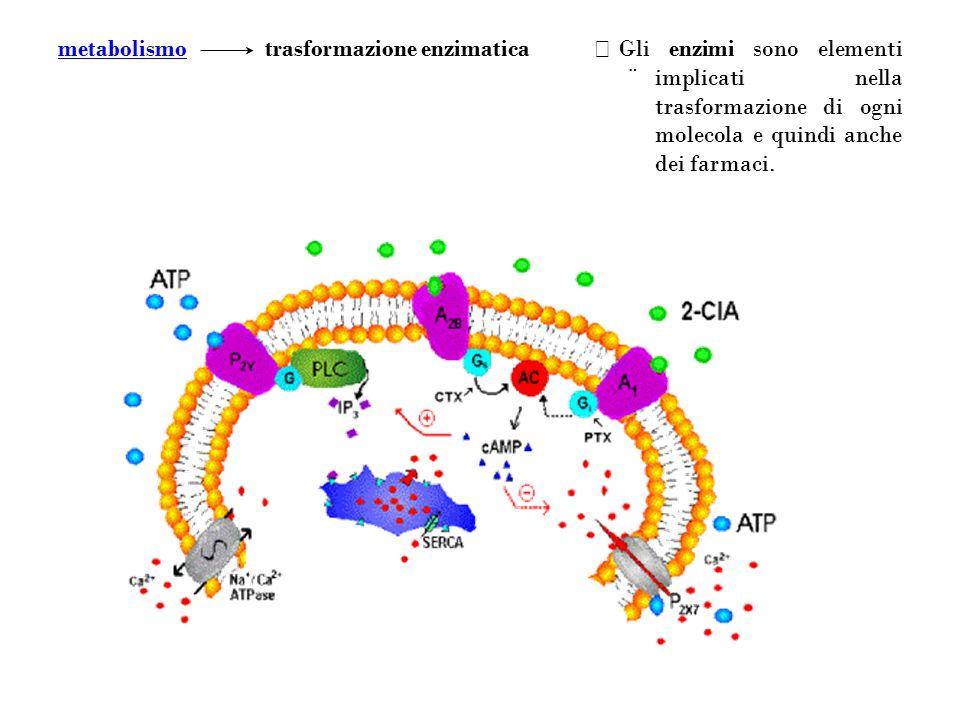 Gli enzimi sono elementi implicati nella trasformazione di ogni molecola e quindi anche dei farmaci. ¨¨ trasformazione enzimaticametabolismo