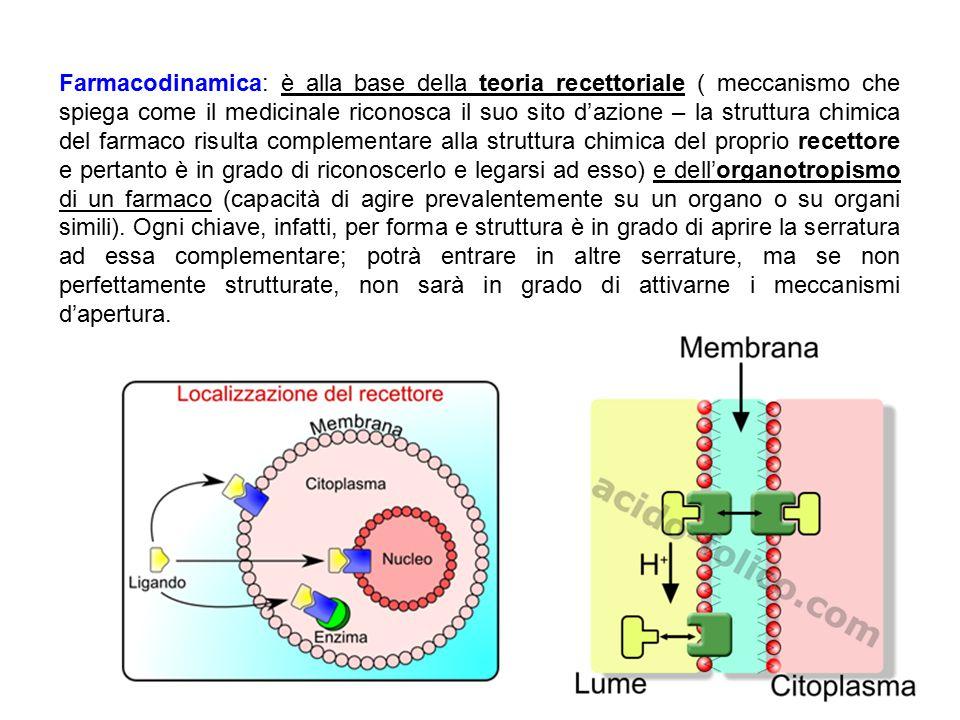 Farmacodinamica: è alla base della teoria recettoriale ( meccanismo che spiega come il medicinale riconosca il suo sito d'azione – la struttura chimic