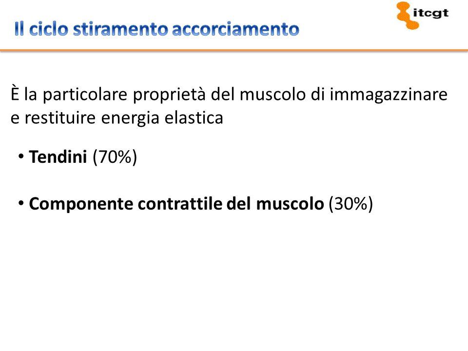 È la particolare proprietà del muscolo di immagazzinare e restituire energia elastica Tendini (70%) Componente contrattile del muscolo (30%)