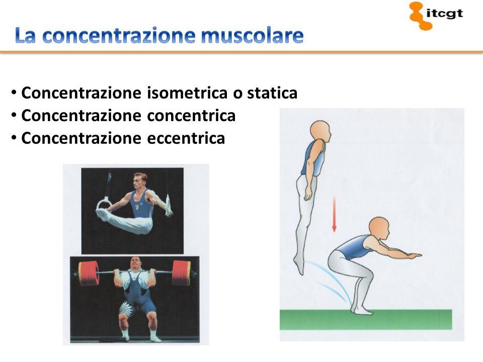 Concentrazione isometrica o statica Concentrazione concentrica Concentrazione eccentrica