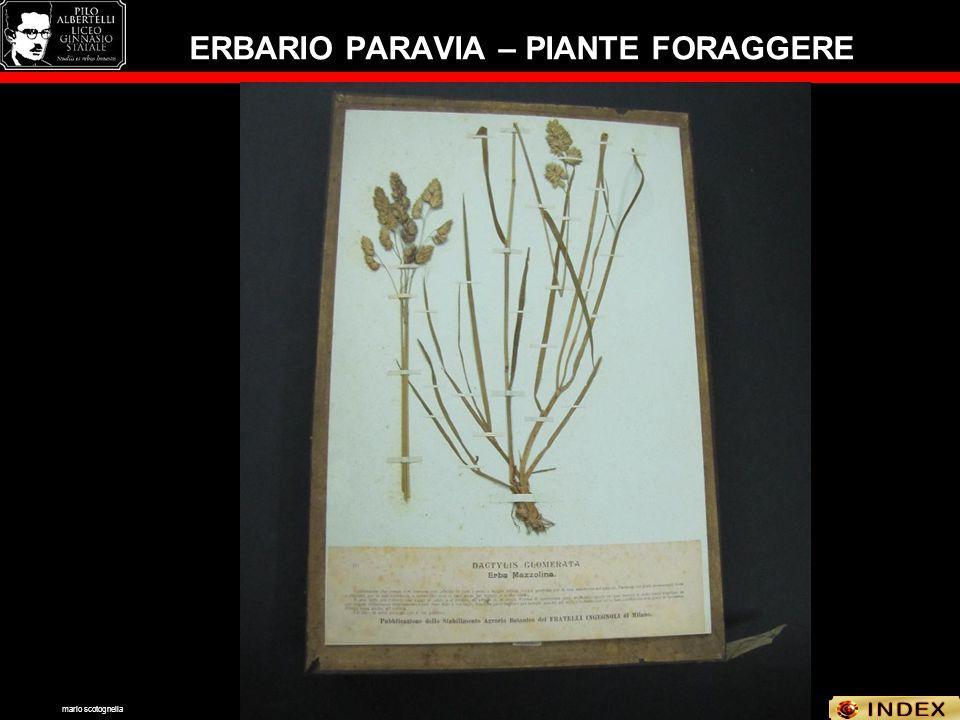 ERBARIO PARAVIA – PIANTE FORAGGERE mario scotognella