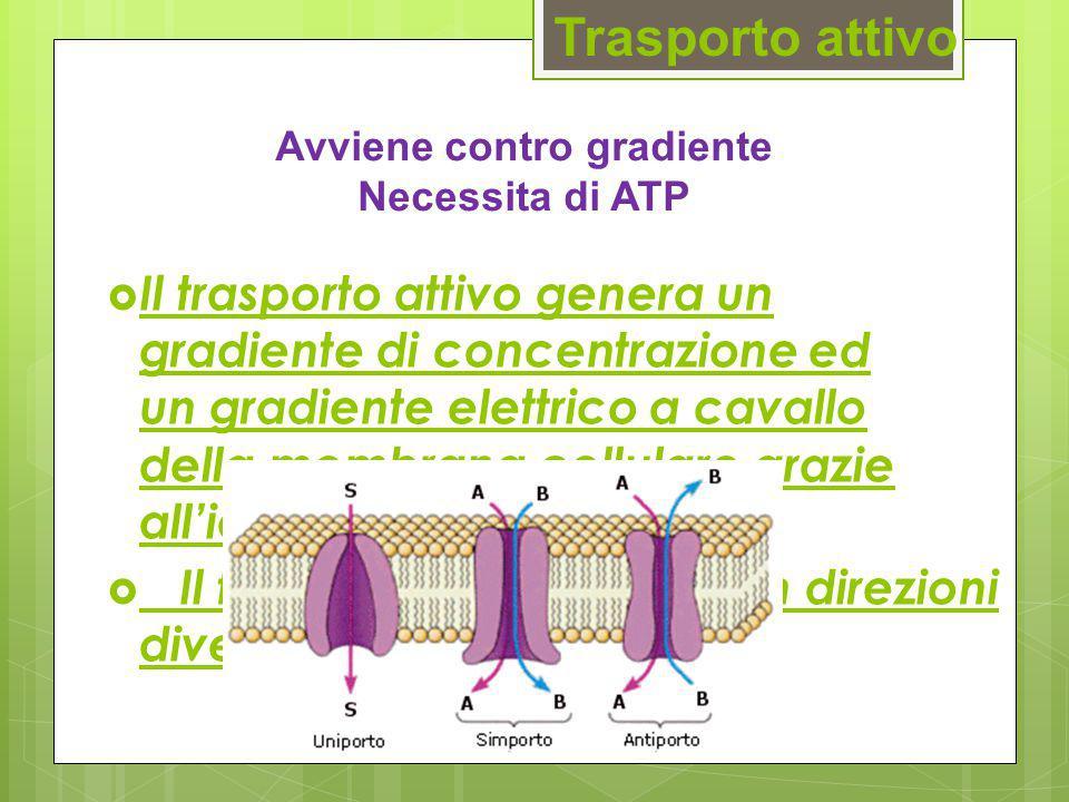 Trasporto attivo  Il trasporto attivo genera un gradiente di concentrazione ed un gradiente elettrico a cavallo della membrana cellulare grazie all'i