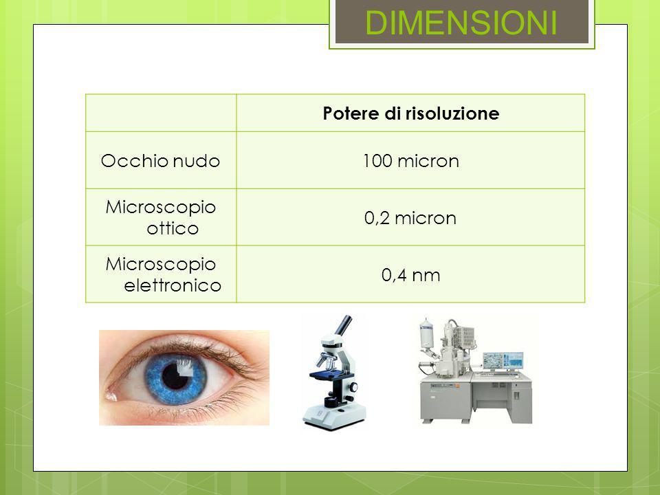 DIMENSIONI Potere di risoluzione Occhio nudo100 micron Microscopio ottico 0,2 micron Microscopio elettronico 0,4 nm