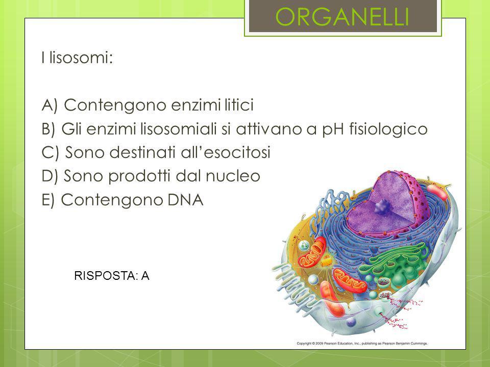 ORGANELLI I lisosomi: A) Contengono enzimi litici B) Gli enzimi lisosomiali si attivano a pH fisiologico C) Sono destinati all'esocitosi D) Sono prodo