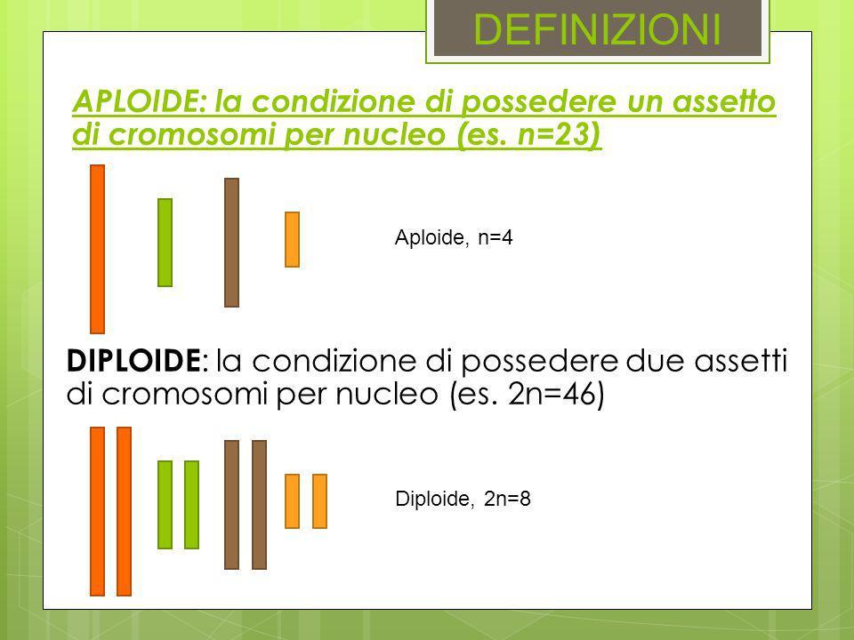 DEFINIZIONI APLOIDE: la condizione di possedere un assetto di cromosomi per nucleo (es. n=23) DIPLOIDE : la condizione di possedere due assetti di cro