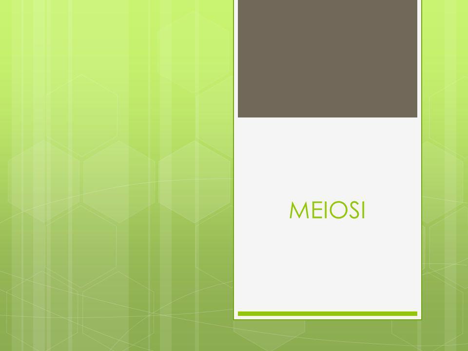 MEIOSI