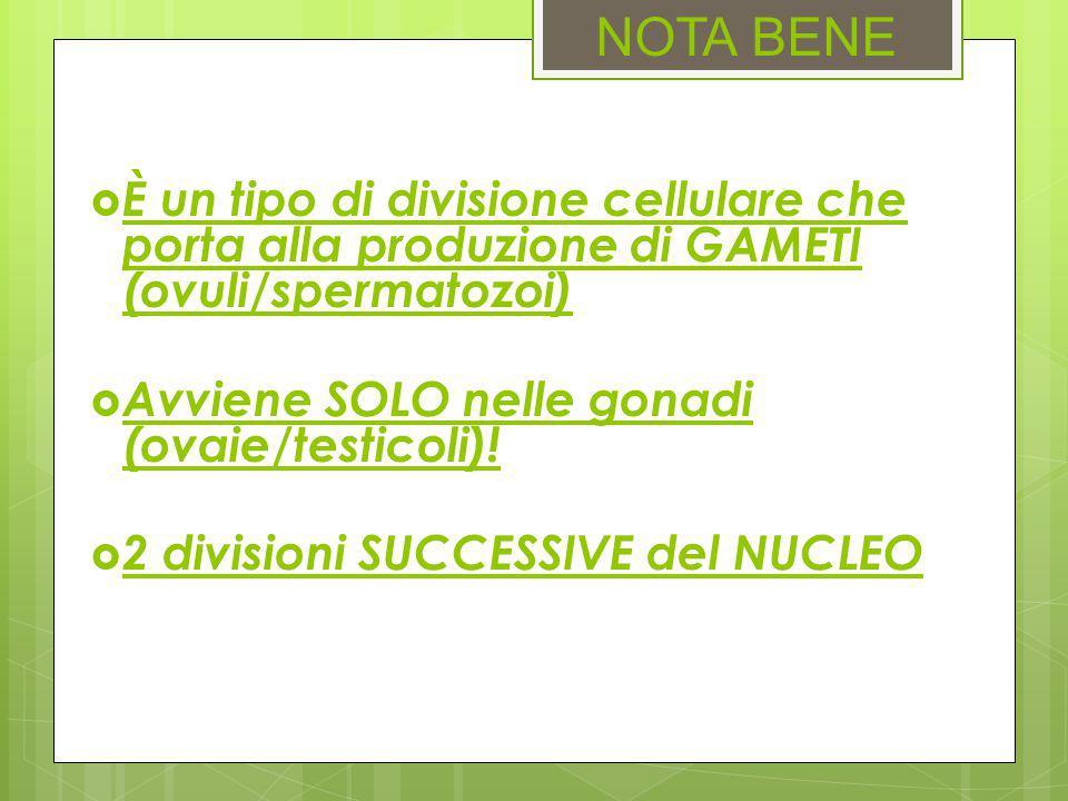 NOTA BENE  È un tipo di divisione cellulare che porta alla produzione di GAMETI (ovuli/spermatozoi)  Avviene SOLO nelle gonadi (ovaie/testicoli)! 