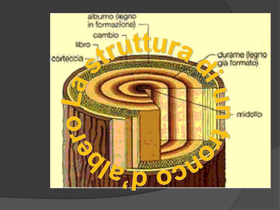Produzione della carta  La produzione della carta iniziò con il cinese TS'AI LUN, 105 d.C.