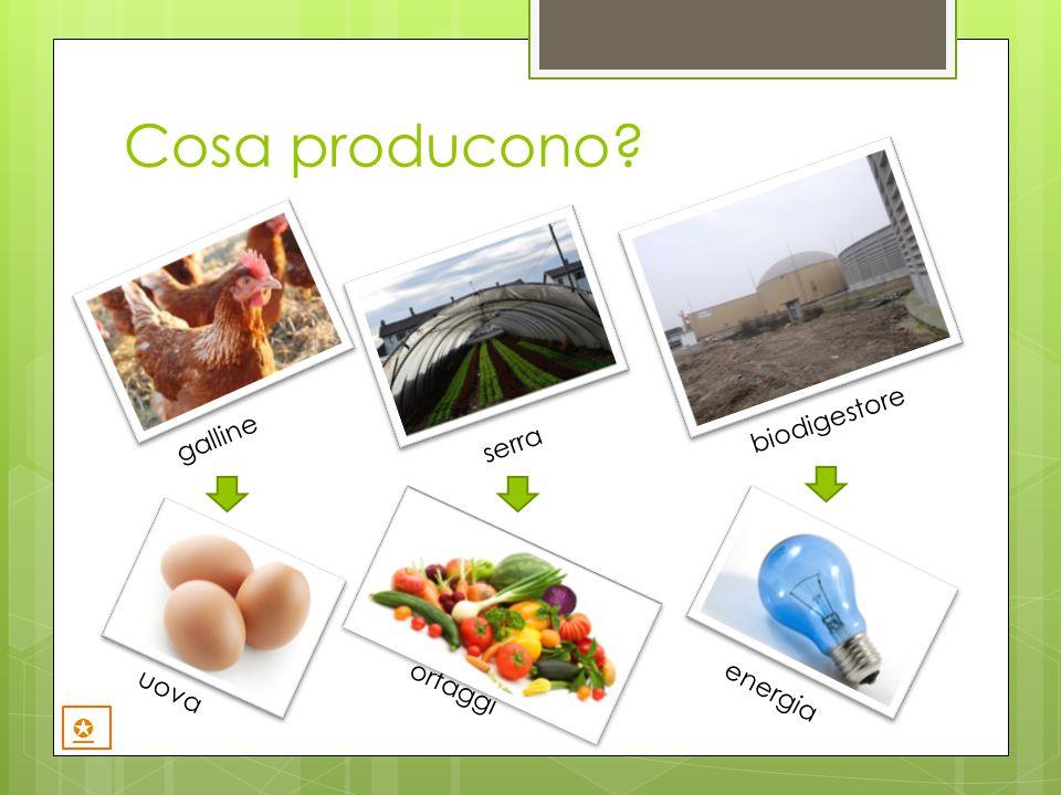 Cosa producono? galline serra biodigestore uova ortaggi energia ✪