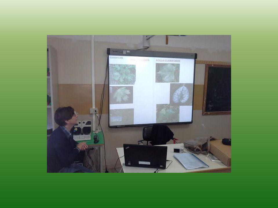 Lo studio delle foglie, lo abbiamo affrontato in modo approfondito Ancora con l 'aiuto della Prof. Paola Filipponi. Abbiamo voluto documentare questo