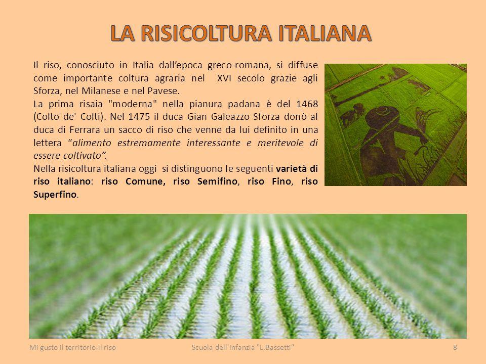 Il riso, conosciuto in Italia dall'epoca greco-romana, si diffuse come importante coltura agraria nel XVI secolo grazie agli Sforza, nel Milanese e ne