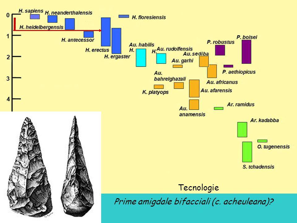 Tecnologie Prime amigdale bifacciali (c. acheuleana)?