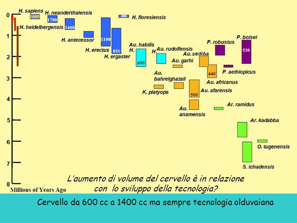 L'aumento di volume del cervello è in relazione con lo sviluppo della tecnologia.