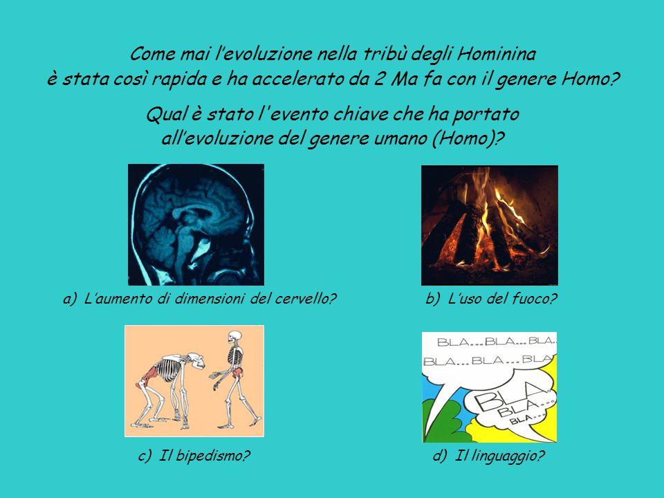 a) L'aumento di dimensioni del cervello.b) L'uso del fuoco.