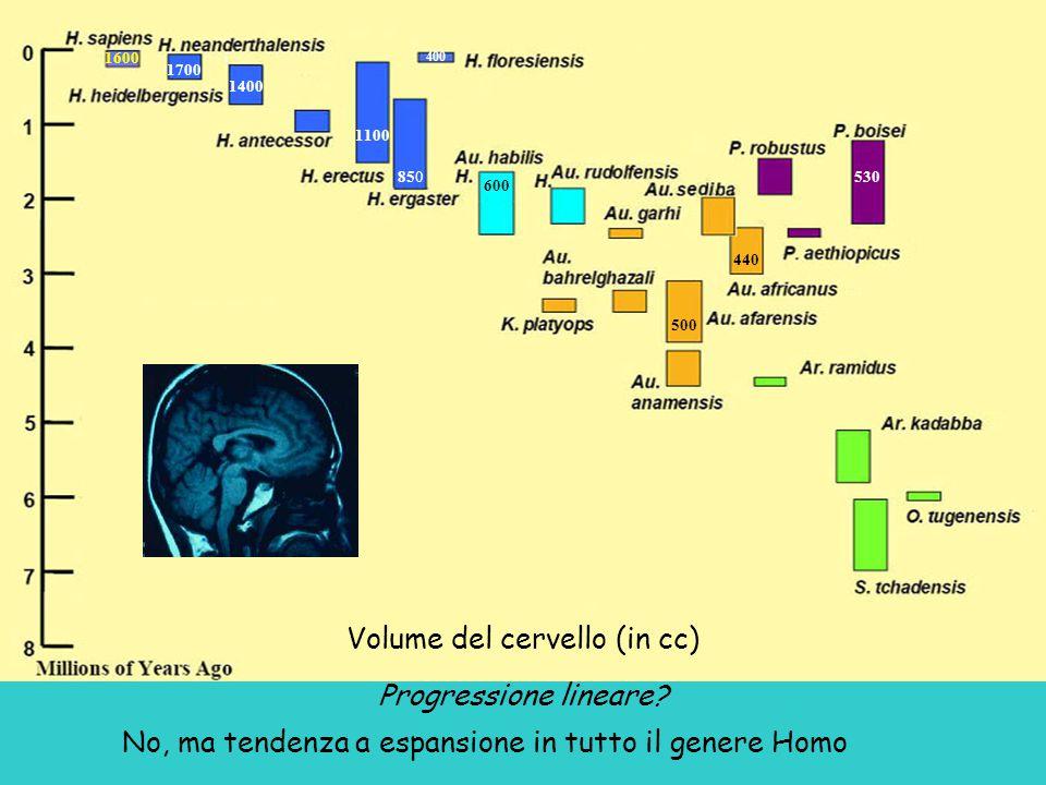 Volume del cervello (in cc) Progressione lineare.