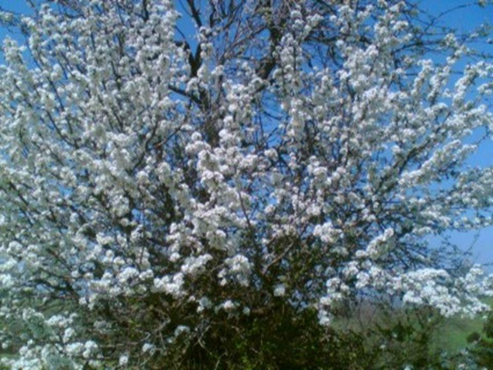 Promuovere l'avvento, allora,è optare per l'inedito accogliere la diversità come gemma di un fiore nuovo,come primizia di un tempo nuovo.