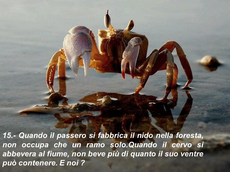 14.- Qualunque sia il tuo tesoro, tienilo nel palmo della mano come fai con l'acqua. Se la stringi, ti sfugge via.
