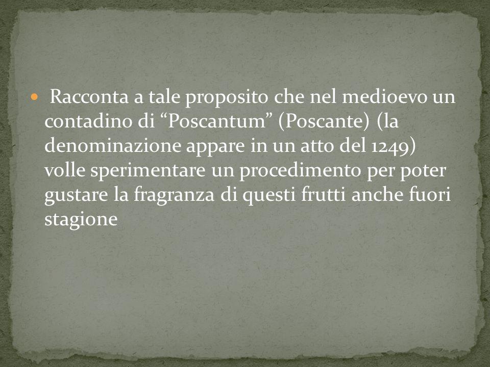 Racconta a tale proposito che nel medioevo un contadino di Poscantum (Poscante) (la denominazione appare in un atto del 1249) volle sperimentare un procedimento per poter gustare la fragranza di questi frutti anche fuori stagione