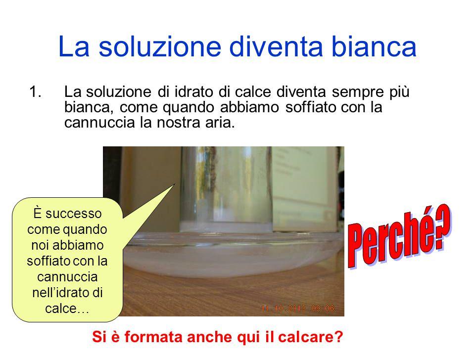 La soluzione diventa bianca 1.La soluzione di idrato di calce diventa sempre più bianca, come quando abbiamo soffiato con la cannuccia la nostra aria.