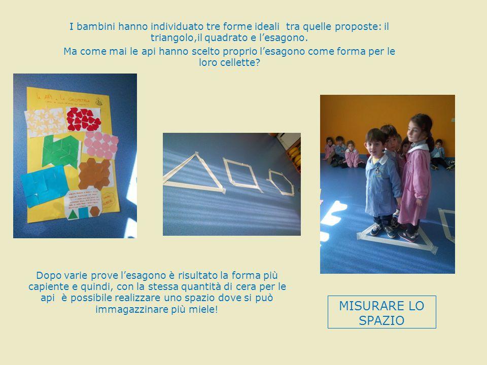 I bambini hanno individuato tre forme ideali tra quelle proposte: il triangolo,il quadrato e l'esagono. Ma come mai le api hanno scelto proprio l'esag