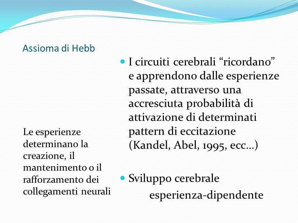 """Assioma di Hebb Le esperienze determinano la creazione, il mantenimento o il rafforzamento dei collegamenti neurali I circuiti cerebrali """"ricordano"""" e"""