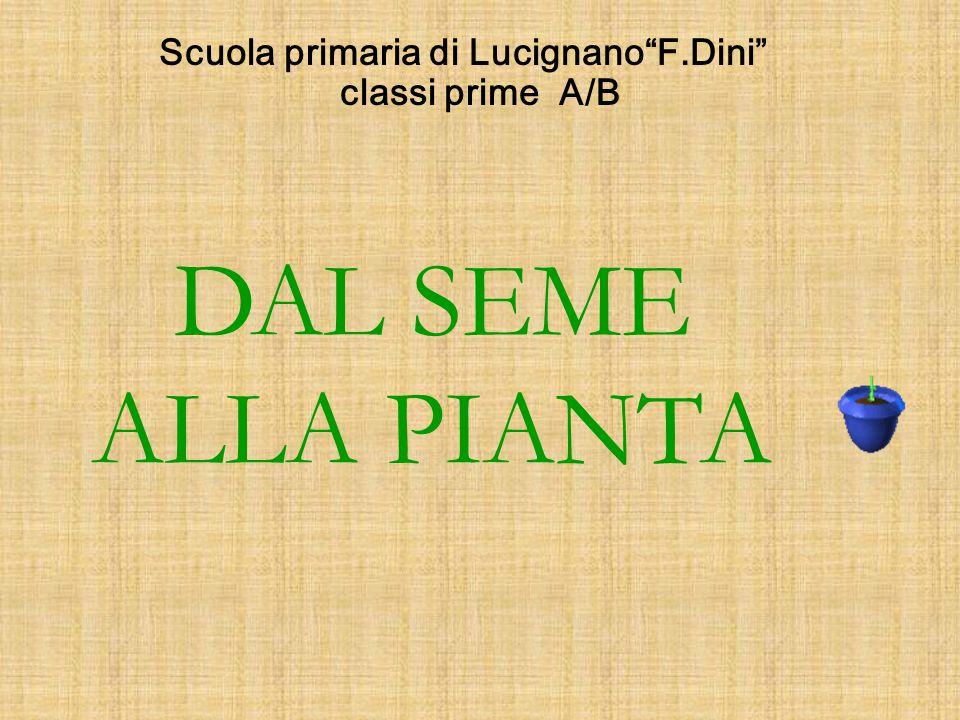 """Scuola primaria di Lucignano""""F.Dini"""" classi prime A/B DAL SEME ALLA PIANTA"""