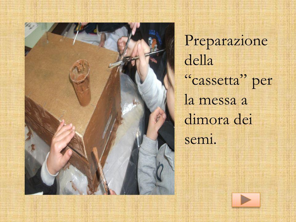 """Preparazione della """"cassetta"""" per la messa a dimora dei semi."""