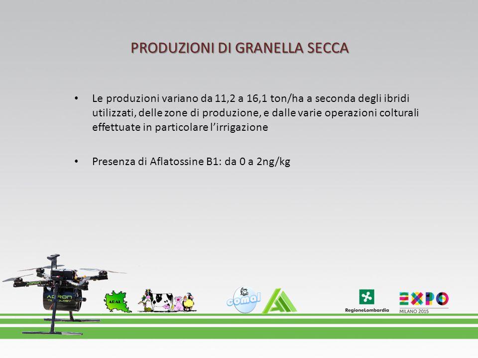 PRODUZIONI DI GRANELLA SECCA Le produzioni variano da 11,2 a 16,1 ton/ha a seconda degli ibridi utilizzati, delle zone di produzione, e dalle varie operazioni colturali effettuate in particolare l'irrigazione Presenza di Aflatossine B1: da 0 a 2ng/kg