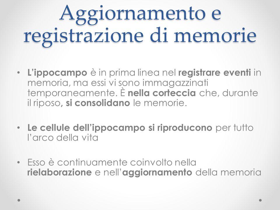 Aggiornamento e registrazione di memorie L'ippocampo è in prima linea nel registrare eventi in memoria, ma essi vi sono immagazzinati temporaneamente.