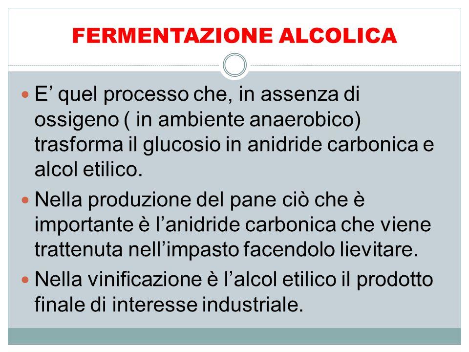 FERMENTAZIONE ALCOLICA E' quel processo che, in assenza di ossigeno ( in ambiente anaerobico) trasforma il glucosio in anidride carbonica e alcol etil