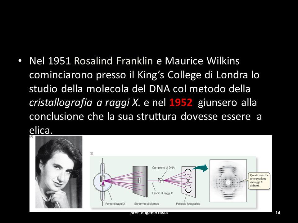Nel 1951 Rosalind Franklin e Maurice Wilkins cominciarono presso il King's College di Londra lo studio della molecola del DNA col metodo della cristal