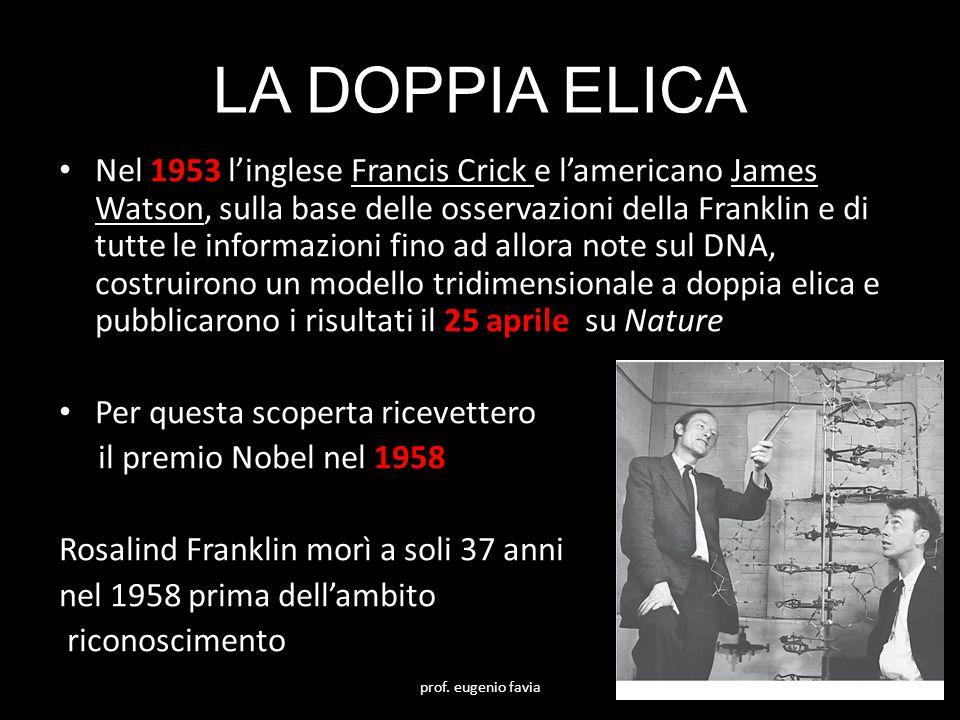 LA DOPPIA ELICA Nel 1953 l'inglese Francis Crick e l'americano James Watson, sulla base delle osservazioni della Franklin e di tutte le informazioni f