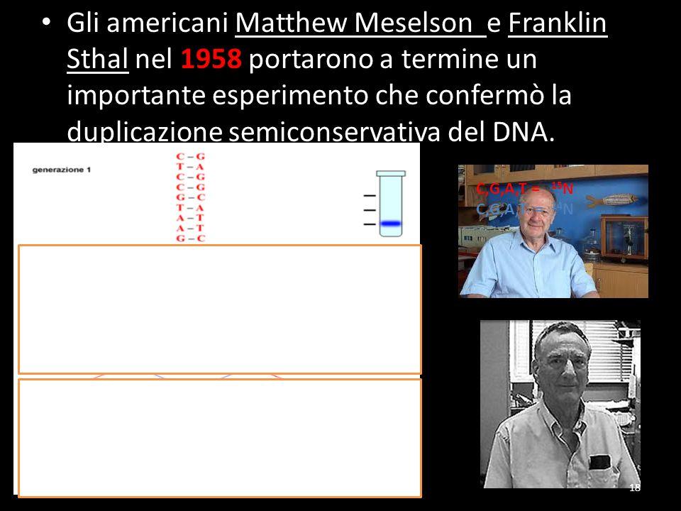 Gli americani Matthew Meselson e Franklin Sthal nel 1958 portarono a termine un importante esperimento che confermò la duplicazione semiconservativa d
