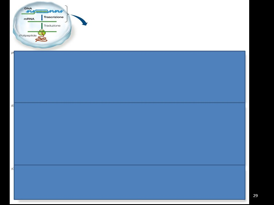 TRASCRIZIONE Il processo di trascrizione avviene in tre fasi prof. eugenio favia29