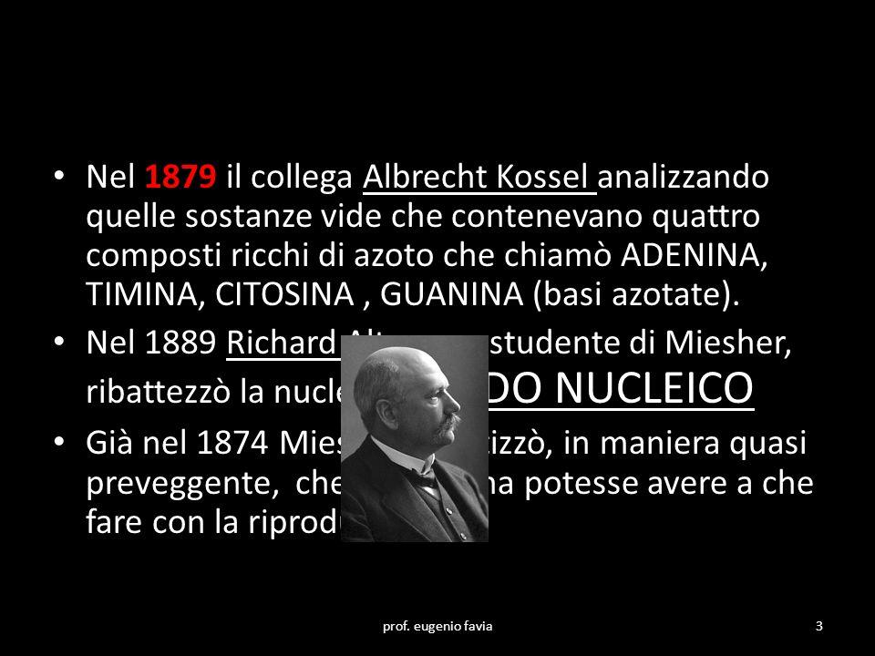 Nel 1879 il collega Albrecht Kossel analizzando quelle sostanze vide che contenevano quattro composti ricchi di azoto che chiamò ADENINA, TIMINA, CITO