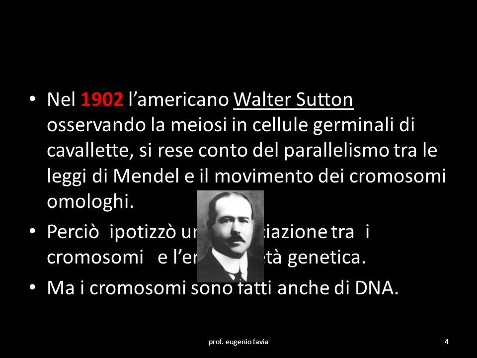 Nel 1902 l'americano Walter Sutton osservando la meiosi in cellule germinali di cavallette, si rese conto del parallelismo tra le leggi di Mendel e il