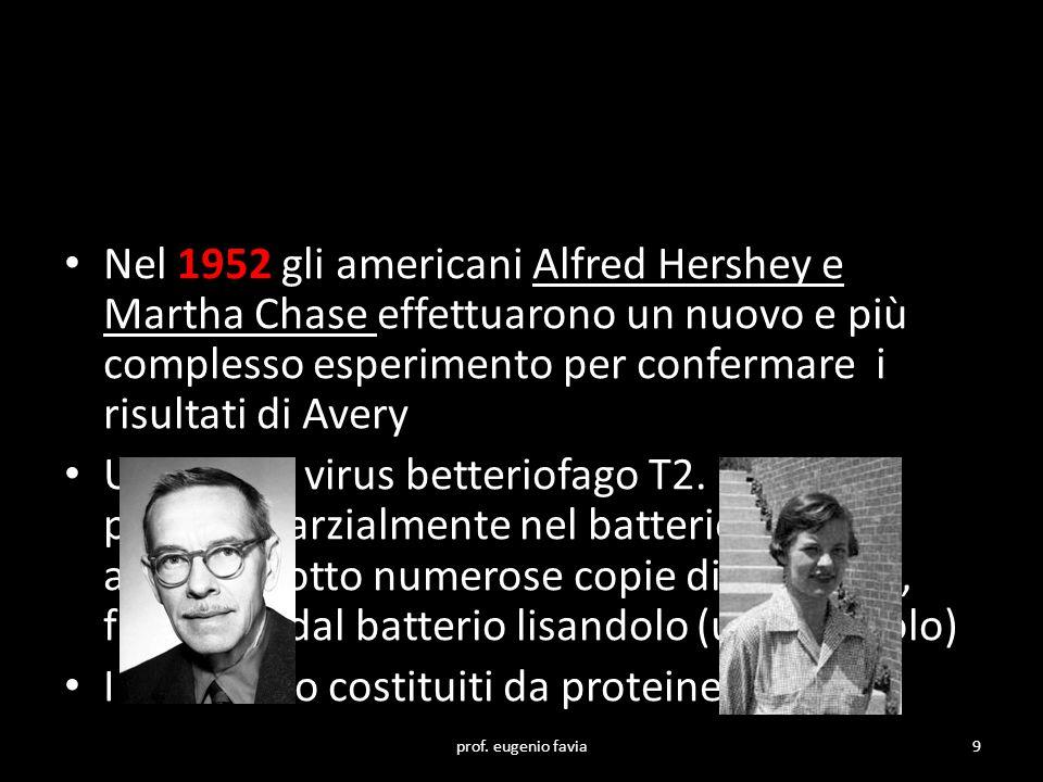Nel 1952 gli americani Alfred Hershey e Martha Chase effettuarono un nuovo e più complesso esperimento per confermare i risultati di Avery Usarono il