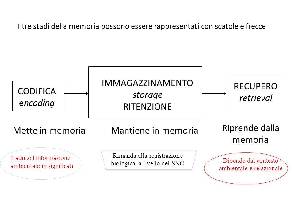 I tre stadi della memoria possono essere rappresentati con scatole e frecce CODIFICA encoding IMMAGAZZINAMENTO storage RITENZIONE RECUPERO retrieval Mette in memoriaMantiene in memoria Riprende dalla memoria Traduce l'informazione ambientale in significati Rimanda alla registrazione biologica, a livello del SNC Dipende dal contesto ambientale e relazionale