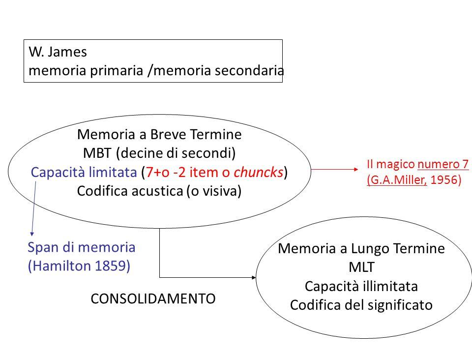 W. James memoria primaria /memoria secondaria Memoria a Breve Termine MBT (decine di secondi) Capacità limitata (7+o -2 item o chuncks) Codifica acust