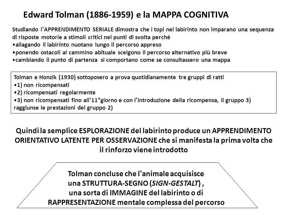 Edward Tolman (1886-1959) e la MAPPA COGNITIVA Studiando l'APPRENDIMENTO SERIALE dimostra che i topi nel labirinto non imparano una sequenza di risposte motorie a stimoli critici nei punti di svolta perché allagando il labirinto nuotano lungo il percorso appreso ponendo ostacoli al cammino abituale scelgono il percorso alternativo più breve cambiando il punto di partenza si comportano come se consultassero una mappa Tolman concluse che l'animale acquisisce una STRUTTURA-SEGNO (SIGN-GESTALT), una sorta di IMMAGINE del labirinto o di RAPPRESENTAZIONE mentale complessa del percorso Quindi la semplice ESPLORAZIONE del labirinto produce un APPRENDIMENTO ORIENTATIVO LATENTE PER OSSERVAZIONE che si manifesta la prima volta che il rinforzo viene introdotto Tolman e Honzik (1930) sottoposero a prova quotidianamente tre gruppi di ratti 1) non ricompensati 2) ricompensati regolarmente 3) non ricompensati fino all'11°giorno e con l'introduzione della ricompensa, il gruppo 3) raggiunse le prestazioni del gruppo 2)