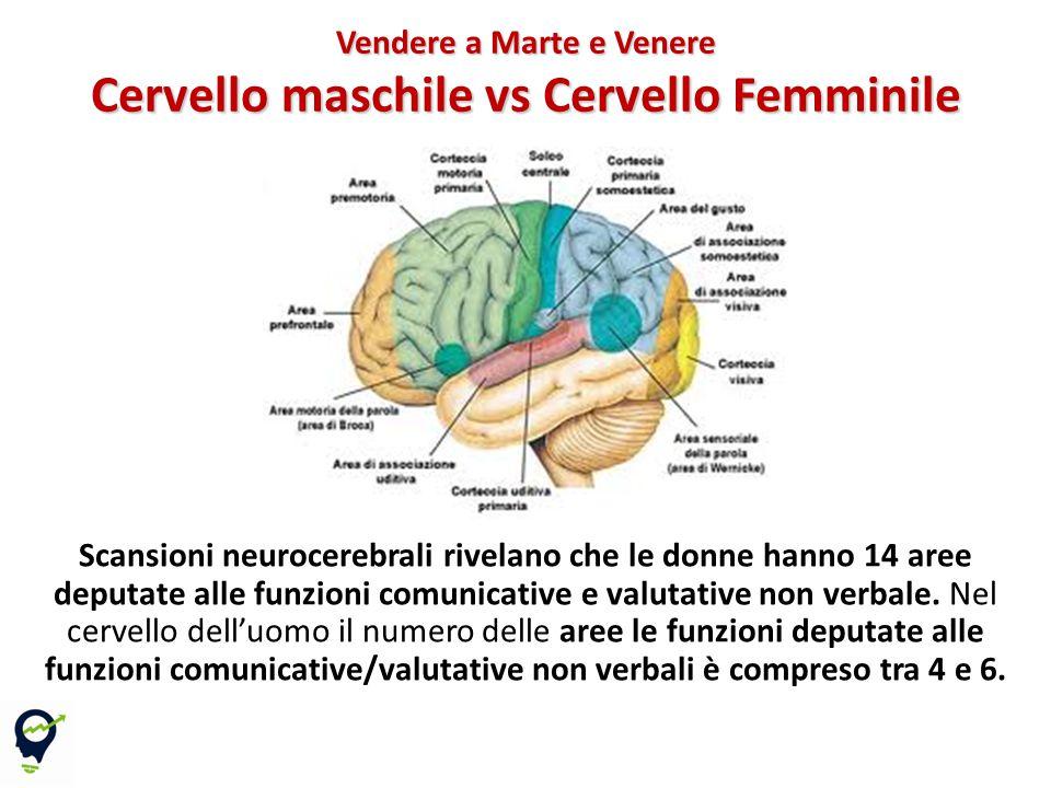 Scansioni neurocerebrali rivelano che le donne hanno 14 aree deputate alle funzioni comunicative e valutative non verbale.