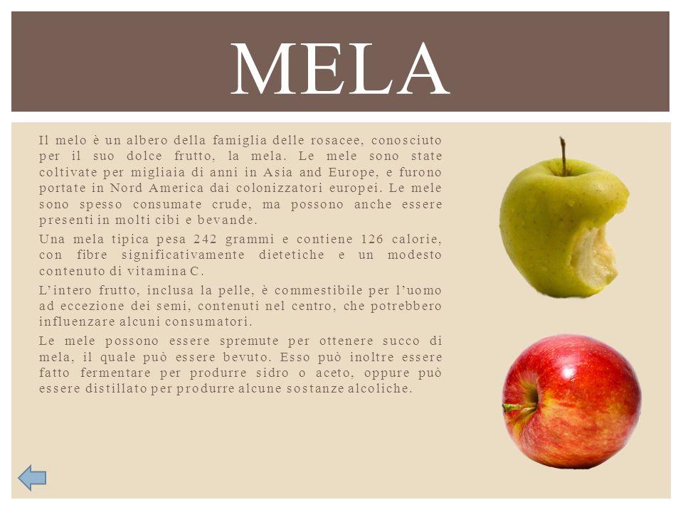 Il melo è un albero della famiglia delle rosacee, conosciuto per il suo dolce frutto, la mela. Le mele sono state coltivate per migliaia di anni in As