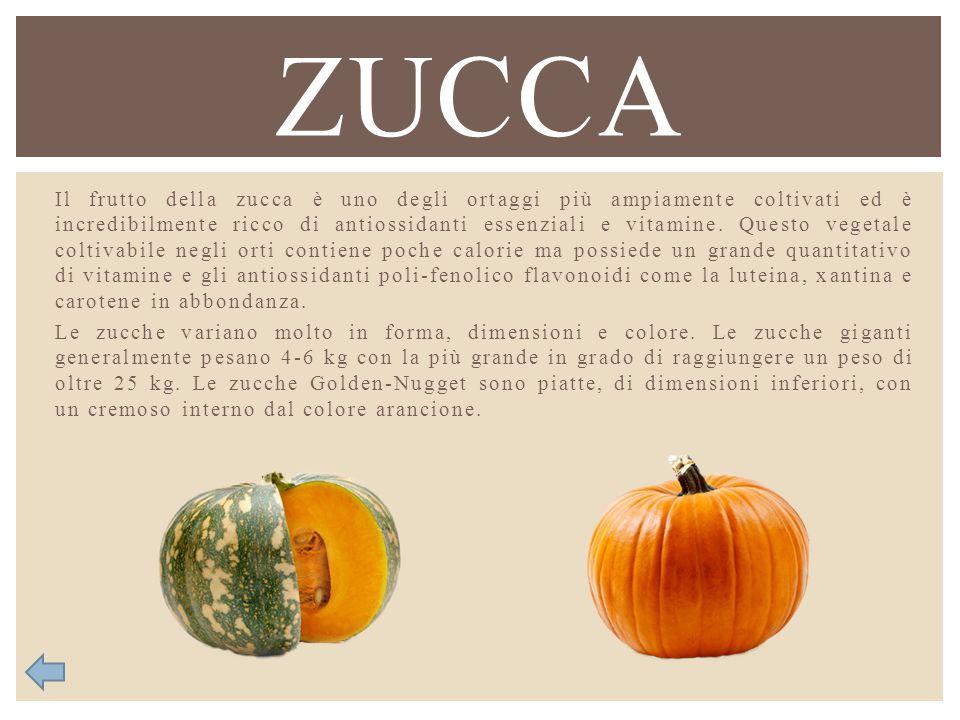 Il frutto della zucca è uno degli ortaggi più ampiamente coltivati ed è incredibilmente ricco di antiossidanti essenziali e vitamine. Questo vegetale