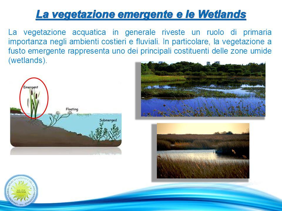 La vegetazione acquatica in generale riveste un ruolo di primaria importanza negli ambienti costieri e fluviali.