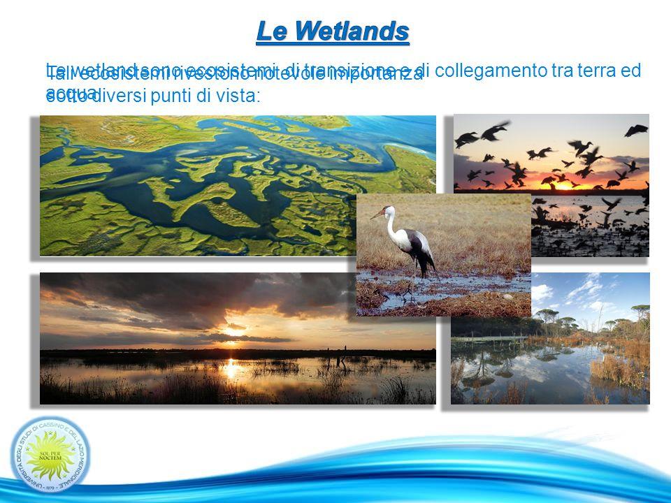 Lo scopo di questo lavoro di tesi è quello di fornire un contributo allo studio sulla gestione e ripristino delle wetland, accrescendo la conoscenza dei processi fisici inerenti ad esse.