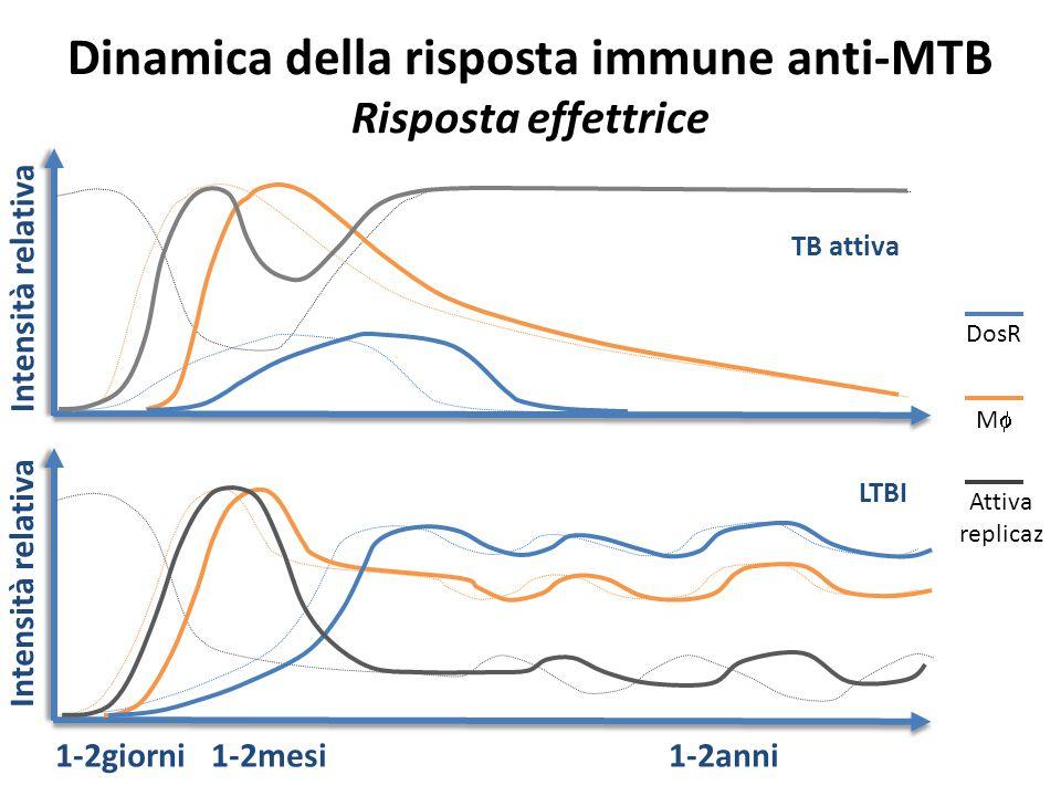Dinamica della risposta immune anti-MTB Risposta effettrice  Intensità relativa TB attiva Intensità relativa 1-2giorni 1-2mesi 1-2anni LTBI DosR MM